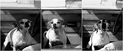 """Hi, little doggie.............whoa, easy..............AAAhhhh!"""