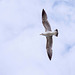 Seagull May set (28)