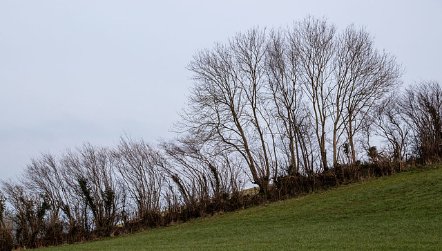 hedge on a hill