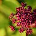 Hortus Botanicus 2018 – Wasp