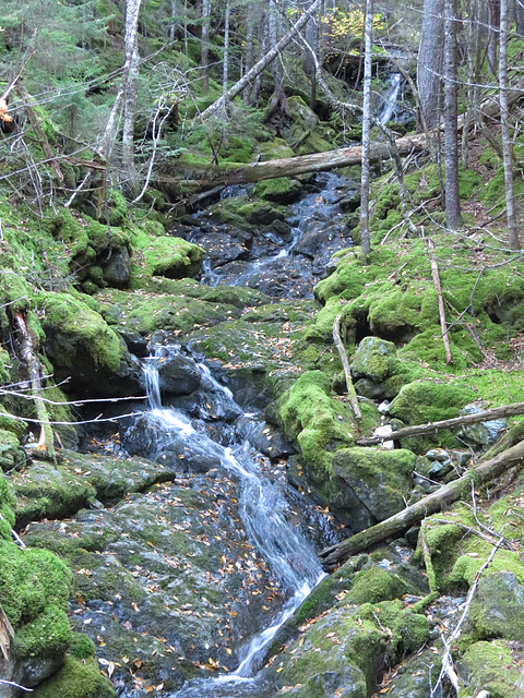 A small stream in Fundy National Park