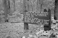 Citaĵo de Thoreau proksime de la Walden-lago (nigra-blanka)
