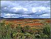 Paisaje de La Rioja alavesa, 2