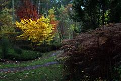 Une journée d'automne aujourd'hui .
