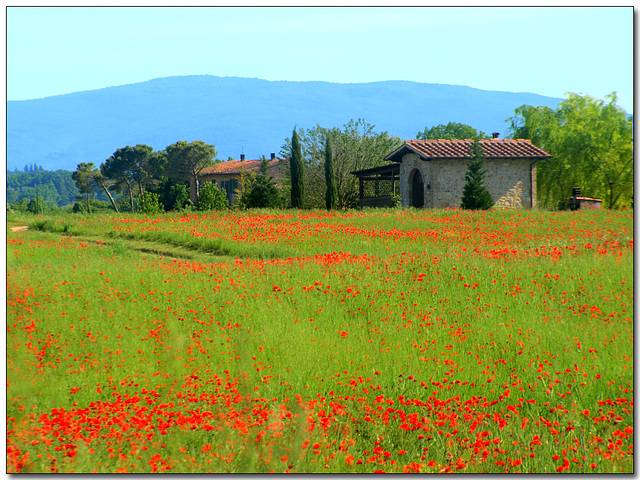 Tuscany - Summer Time