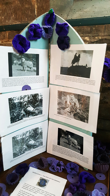 Purple Poppies in remembrance of the animals of WWI