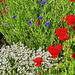 P1300524- Jardin patriote - Jardin  28 mai 2020