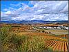Paisaje de La Rioja alavesa, 3