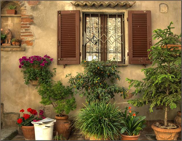 Window of delight