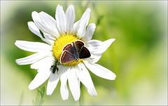 Compter fleurette.....???