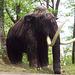Mammoth, Lasceaux