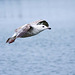 Seagull May set (39)