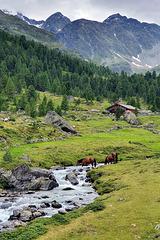 Nature Reserve 'Hohe Tauern' (3)