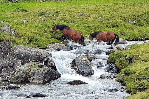 Nature Reserve 'Hohe Tauern' (4)