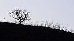 Serra Algarvia, Fire aftermath