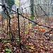 Wald-Zaun am Bienen-Haus