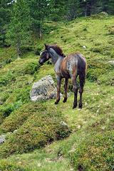Nature Reserve 'Hohe Tauern' (5)