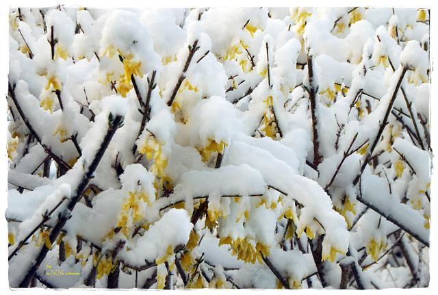 Wintereinbruch [1]