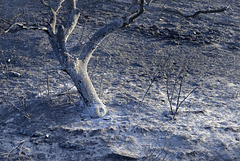 Algarve, Castro Marim area - Fire aftermath - World Photography Day - August 19th, 2021