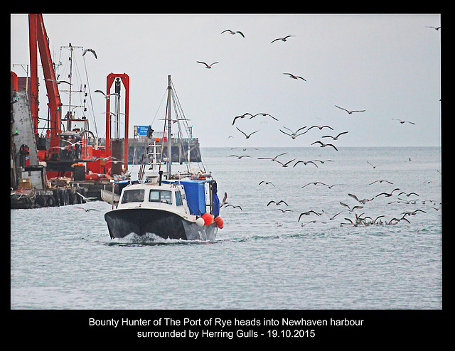 Bounty Hunter & gulls head into Newhaven - 19.10.2015