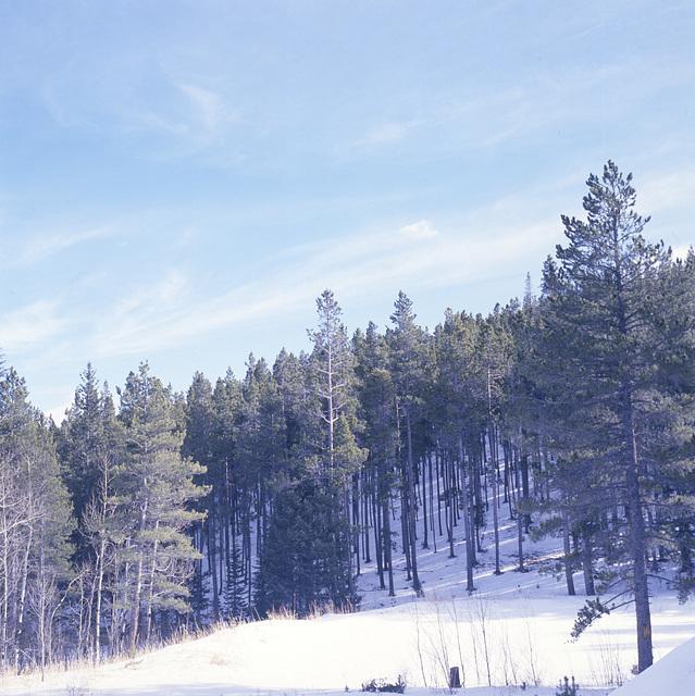 Colorado Mountain Meadow