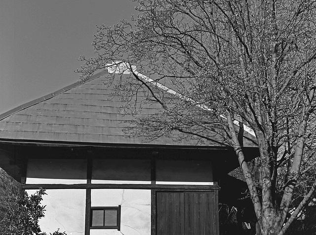 Magnolia and a house