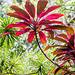 La Réunion - Saint Philippe - Jardin des parfums et des épices