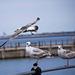 Seagull May set (43)