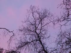 Arboles invernales al atardecer