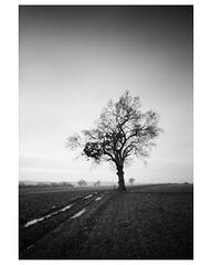 Pinhole tree (again)