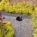 Hortus Botanicus 2018 – Cat