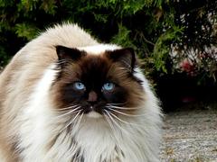 Blauwe ogen.....