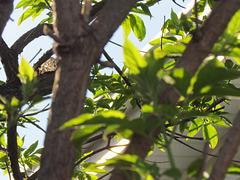 Voir entre les branches !