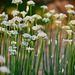 Hortus Botanicus 2018 – Flowers