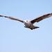 Seagull May set (48)