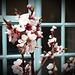 Peach blossom vignette