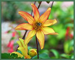L'Amour est un jardin. N'y entre pas si tu ne peux pas sentir Son parfum.