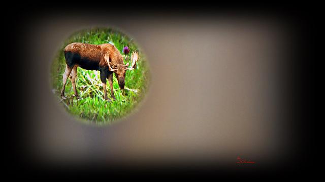 Das Loch im Zaun ... ;-)
