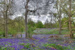 Coombe wood   /   May 2021