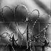 Razor wire hearts