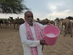 Schäumende Kamelmilch