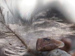 Steinchen und Feder