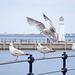 Seagull May set (53)