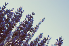 la mirada violeta