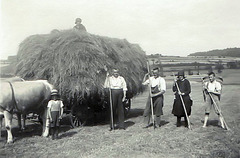 Make hay - in the year 1944-45