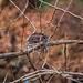 Bird's Nest in Winter