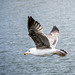 Seagull May set (55)
