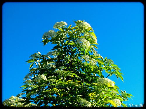 *** Bientôt les arbres fleuriront ***