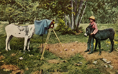 "Donkey Photography—""Look Pleasant"""