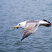 Seagull May set (56)